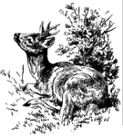 Bock 15